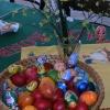 Velikonoce na rychtě Jablonec nad Nisou 13.4.2009